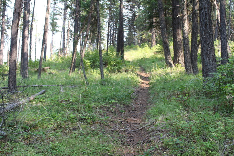 Some of the great singletrack toward the end of Timber Mountain Trail
