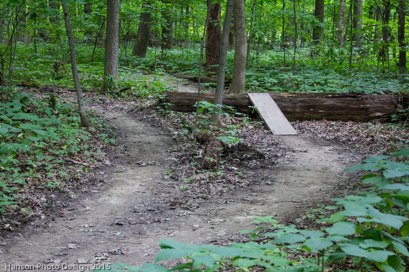Optional log over features on the upper North Loop trail.