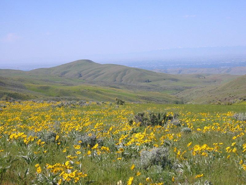 Amazing flowers on the Fiddleneck Ridge Trail.