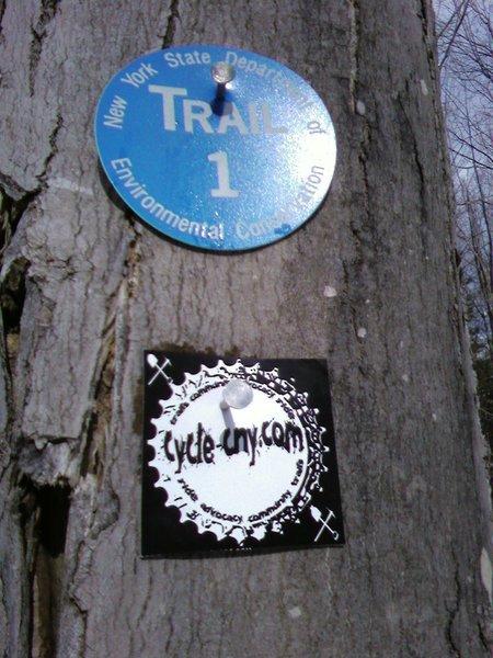 Trail marker - Blue #1