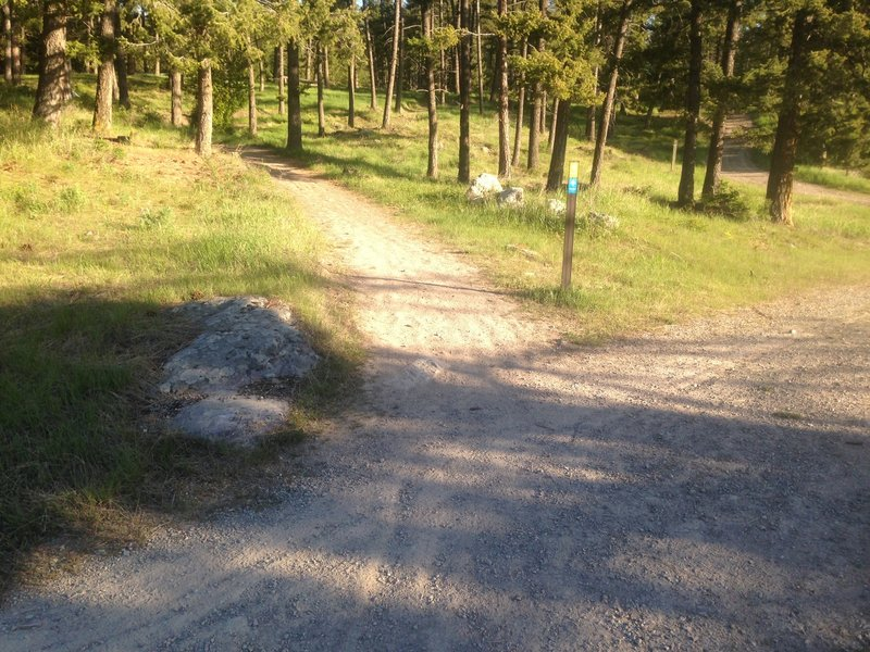 Cross the service road and continue on the singletrack.