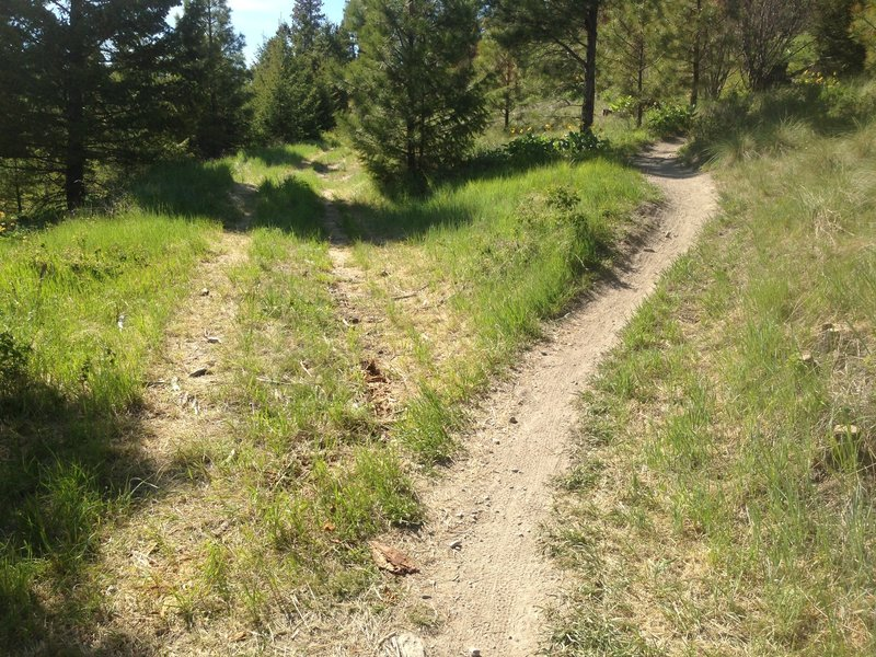 Switchbacks begin to the right.  Countdown the 9 then savor the downhill.