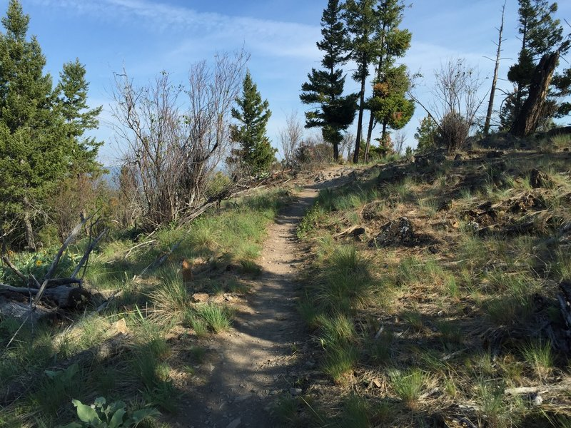 The end of the switchbacks as you ascend the Overlook Trail, one simple rock pile to clear.