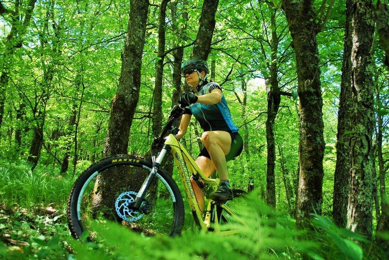 Emerald Outback Loop Beech Mountain Mountain Bike Trail Banner Elk North Carolina