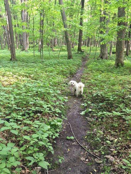 Dogs love Eau Pleine