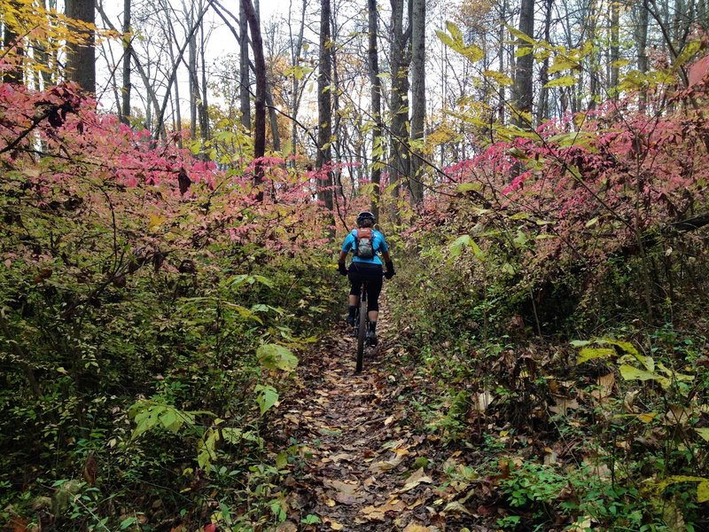 Descending Rockhouse Trail to Sells Park in the City of Athens.