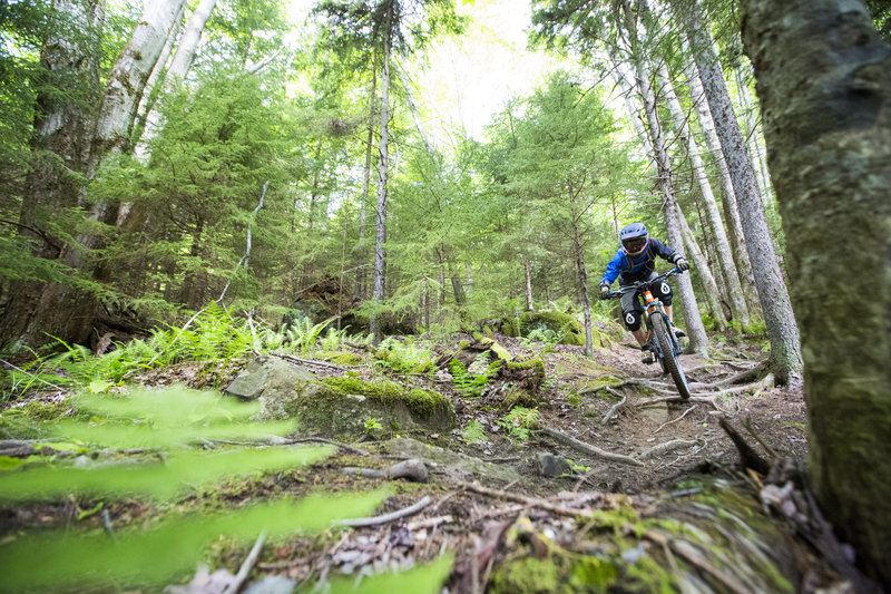 The upper end of H trail has plenty of steep root sections as soon as you drop in.