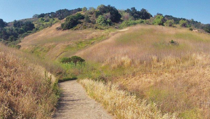 The Puente Hills at Schabarum Park