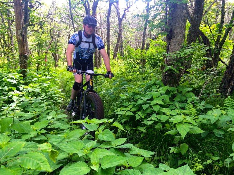 Cruising through the lush undergrowth on Chamberlin's Loop
