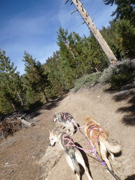 Mushing Camp Trail