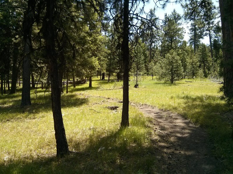 Meadow area near the middle of the descent.