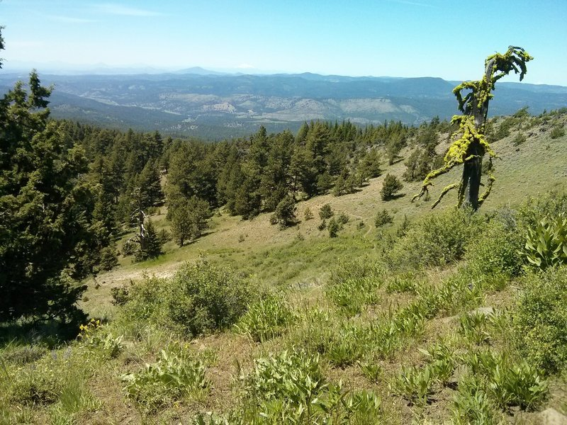 Looking north on the Lower Lookout Mountain trail.