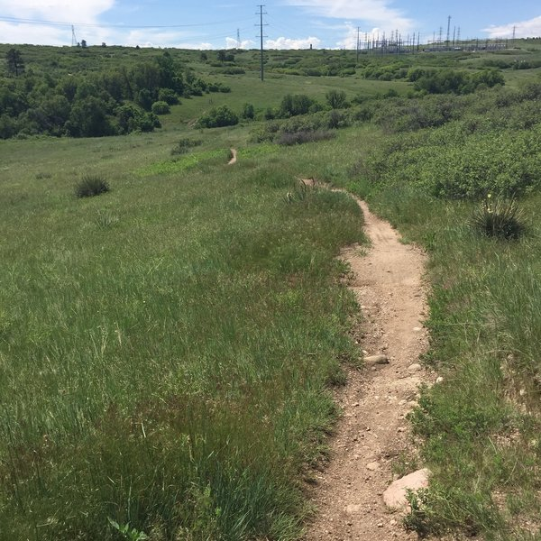 A good idea of what most of the singletrack on this loop looks like.
