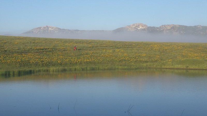 Willard Peak and Ben Lomond Peak in the background