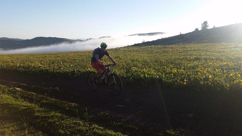 Nice fog bank