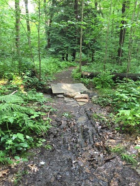 Small bridge on the Sleepy Hollow Trail