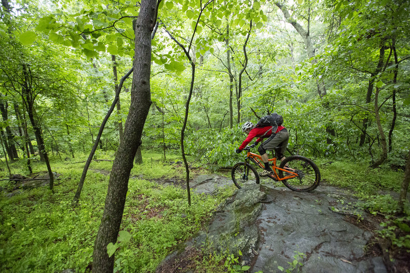Dropping into the green on the Emmitsburg advanced trail.