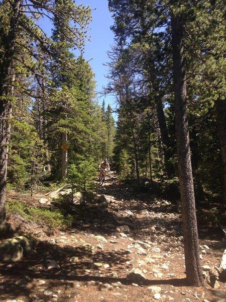 Shredding!  Wapiti Trail