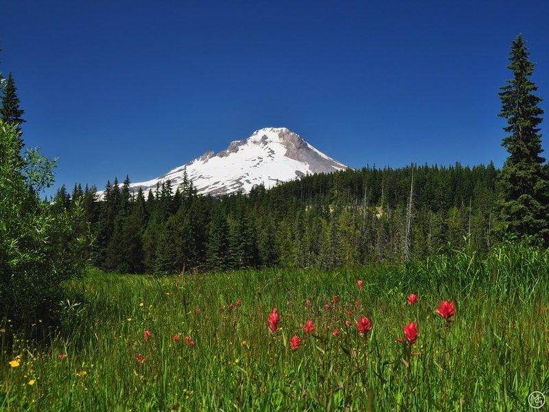 Summit Meadows