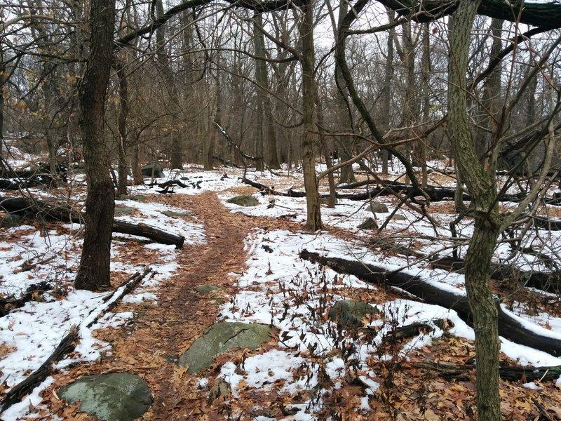 Snowy beginner trail