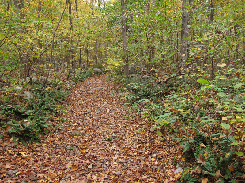 Allamuchy Mountain State Park forest