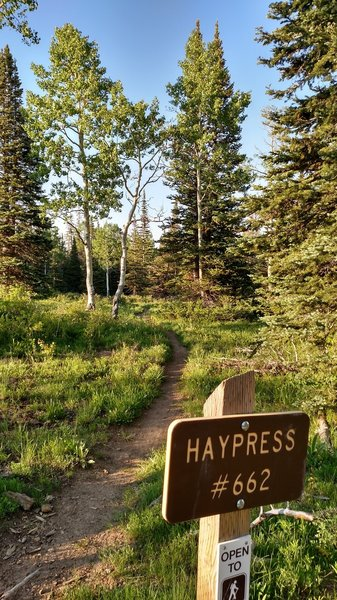 The breakoff of the Haypress trail from the ATV Ridge trail