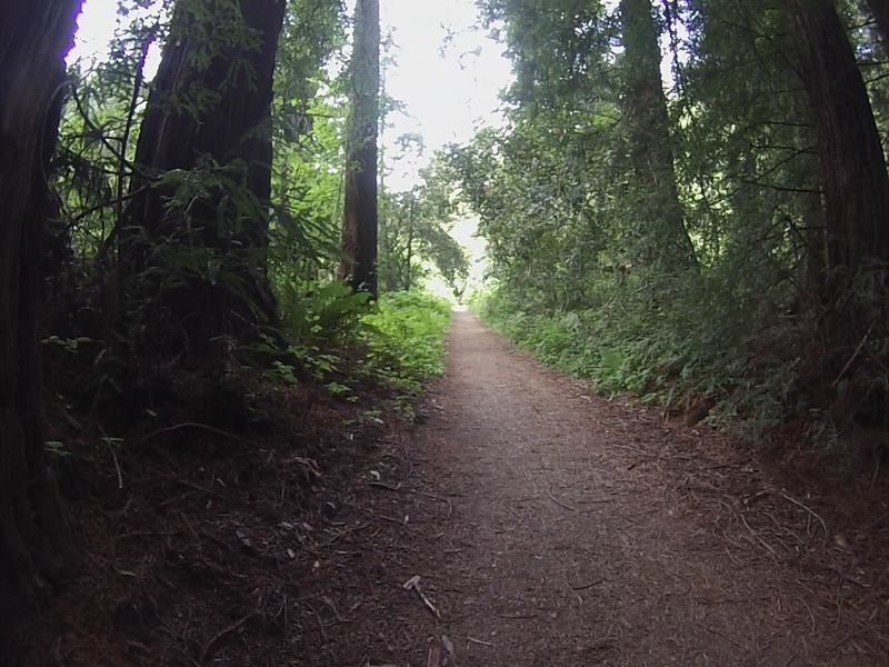 One of the sections where the trail narrows to singletrack