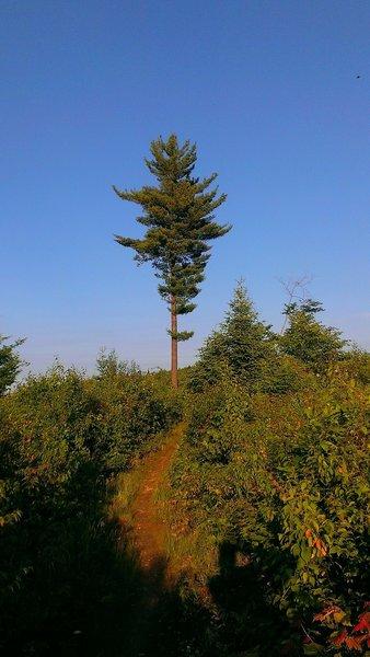 One last tree!