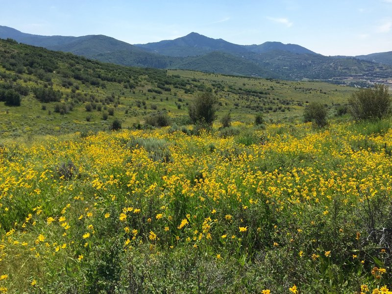 Near bottom, beautiful wild flowers the entire trail