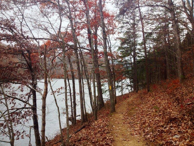 Mike Tygart Trail along the shore of Greenbo Lake