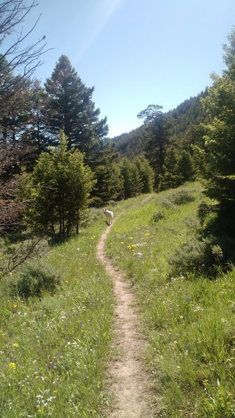 Dense trees give way to more open meadows and spotty forest as you descend down the canyon.