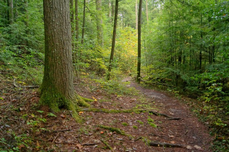 Along the Sheltowee Trace