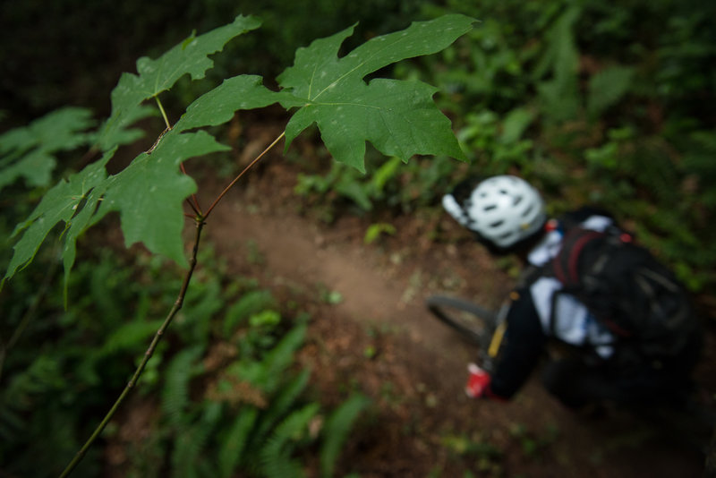 A racer starts on Falcon Punch during the Cascadia National Enduro Championship.