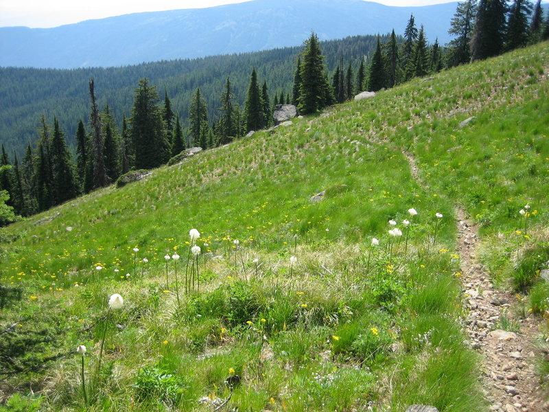 Pleasant riding through meadows.