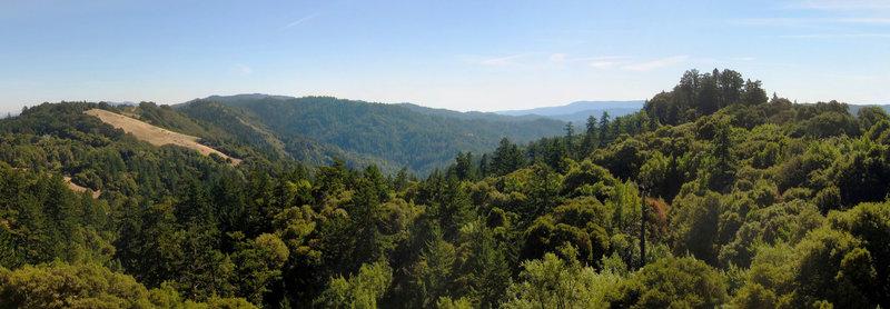 Russian Ridge Open Space Preserve Ancient Oaks Trail