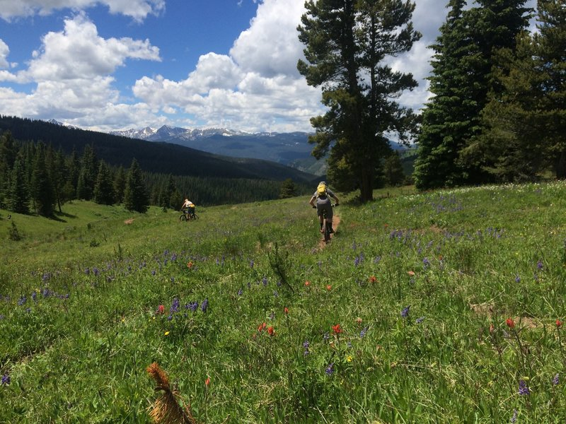 Big skies and wild flowers abound in outer Mongolia Bowl.