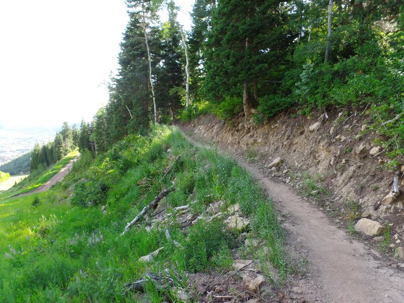 Part of Jenni's Trail that launches you up into a forested area with some great views of the surrounding area.