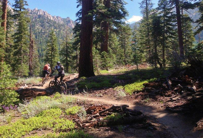 Armstrong Pass Ride Mountain Bike Trail, South Lake Tahoe, California