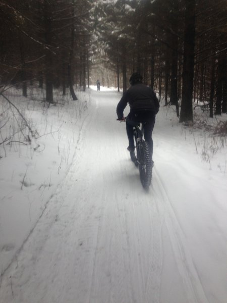 WAMB grooms the Cherry Hill trail for fat-biking in the winter!