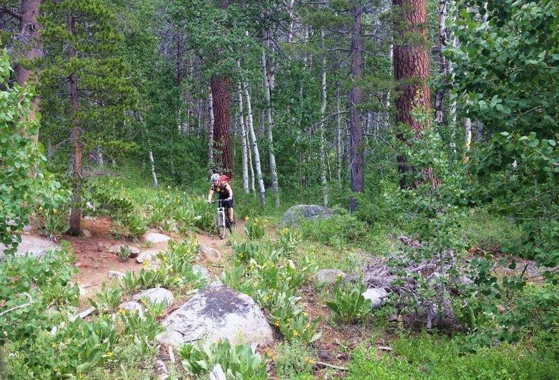 Leaving an aspen grove
