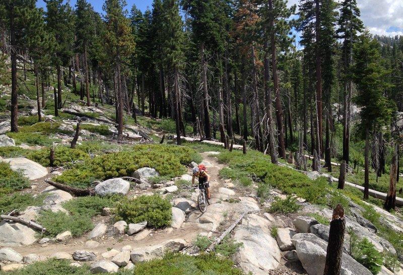 Christmas Valley Trail, through an old burn.