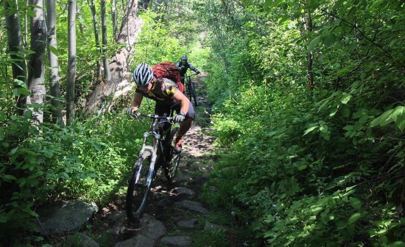 Climbing up Hawley Grade Trail.... green!