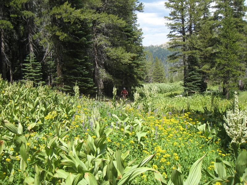 Wildflowers blooming on the TRT
