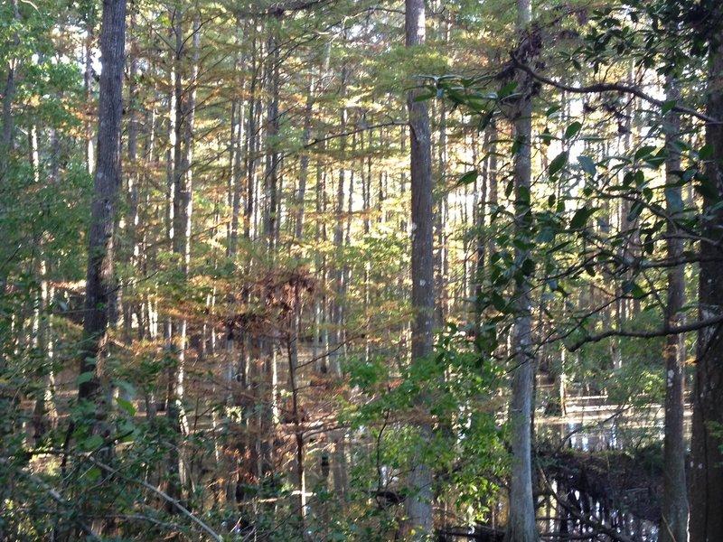 Swamp overlook