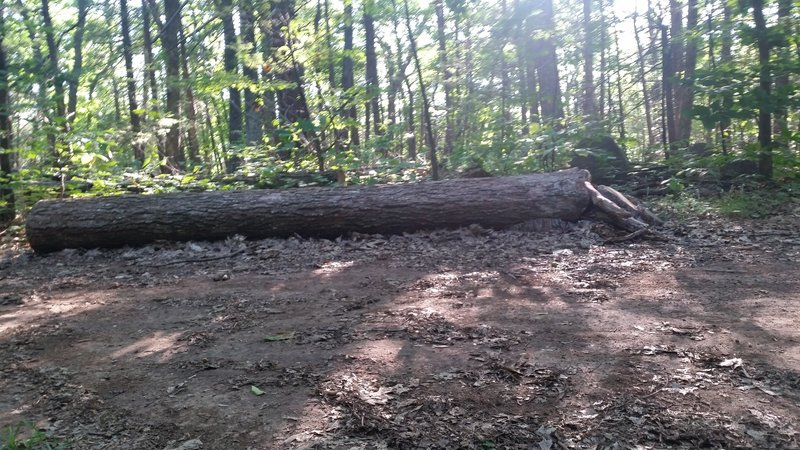 Log to ride, about 15 feet long. Easy ramp on the right.