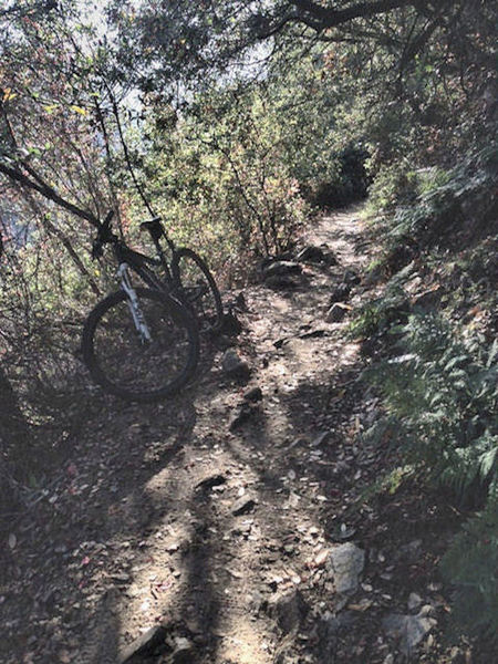 Typical trail conditions along Upper Winter Creek Trail section.  Periodic technical sections keep things interesting.