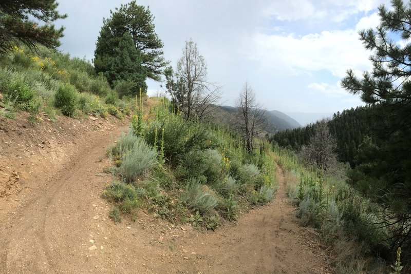 Nearing the high point of the trail before descending into Reynolds Park - after ascending from Reynolds Park.