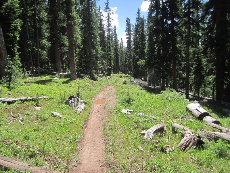 First part of Reno Ridge heading to Deadmans Gulch jct.