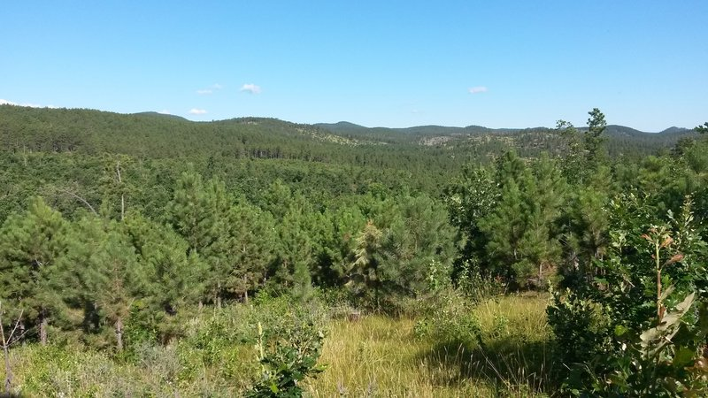 View of the Black Hills from the trail.  Getting close to the start of the head of the lollipop.