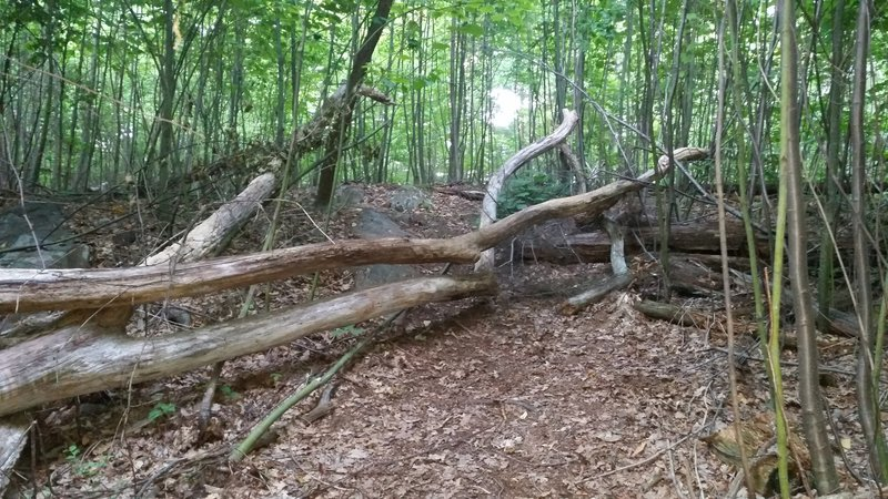 The trail gods have cleared this tree fall.